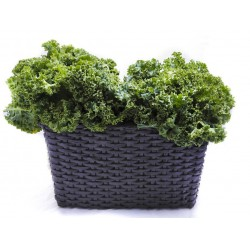 Kale $4.49 per bunch