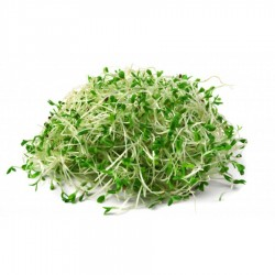 Sprouts, Alfalfa 115g