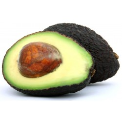 Avocado (Hass)