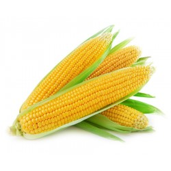 Corn (whole) $2.49 each