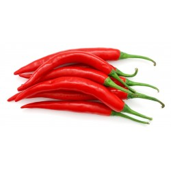 Chillies Little Bullet (red) x 5