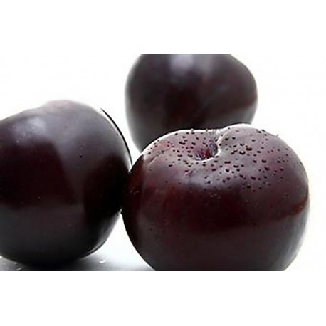 Plums (Ebony Sun)