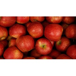 Apples, Crimson Snow 1kg  ($4.50/kg)