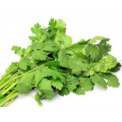 Coriander $2.50 per bunch