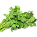 Coriander $3.50 per bunch