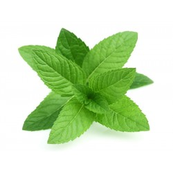 Mint $2.50 per bunch