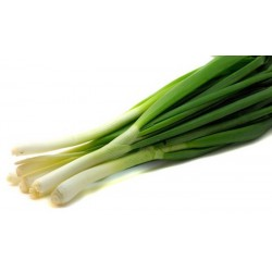 Shallots (green onion) 1 Bunch