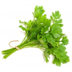 Parsley, Continental (bunch) $2.50 per bunch