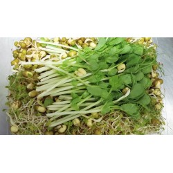 Sprouts Triple Pack (Field Peas, Alfalfa, Mung Beans) - 125grams