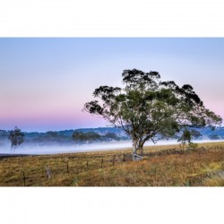 Misty Outback Morning - wall art by Stephen Carter