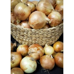 Onions (brown)