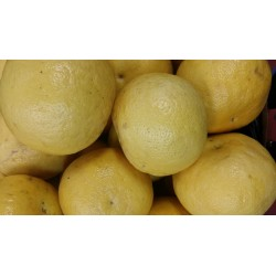 Grapefruit Seedless $2.35 Each ($4.99/kg)